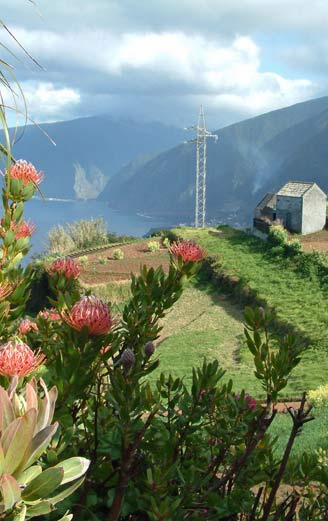 Madeira landscape and flowers