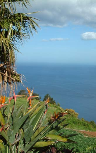 holidays in Madeira
